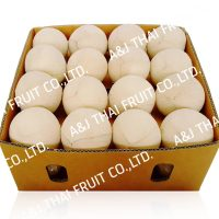4U_Box32_Polished Coconut _Cone Type
