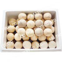 4U_Box60_Polished Coconut _Cone Type